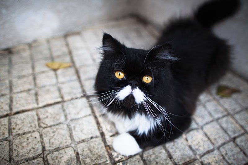 Black And White Cat Names Male Female The Cute Creative Cool Cute Cat Names Kitten Names Unique Cat Names