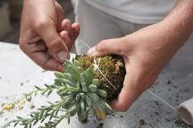 diy kokedama string garden - Google Search