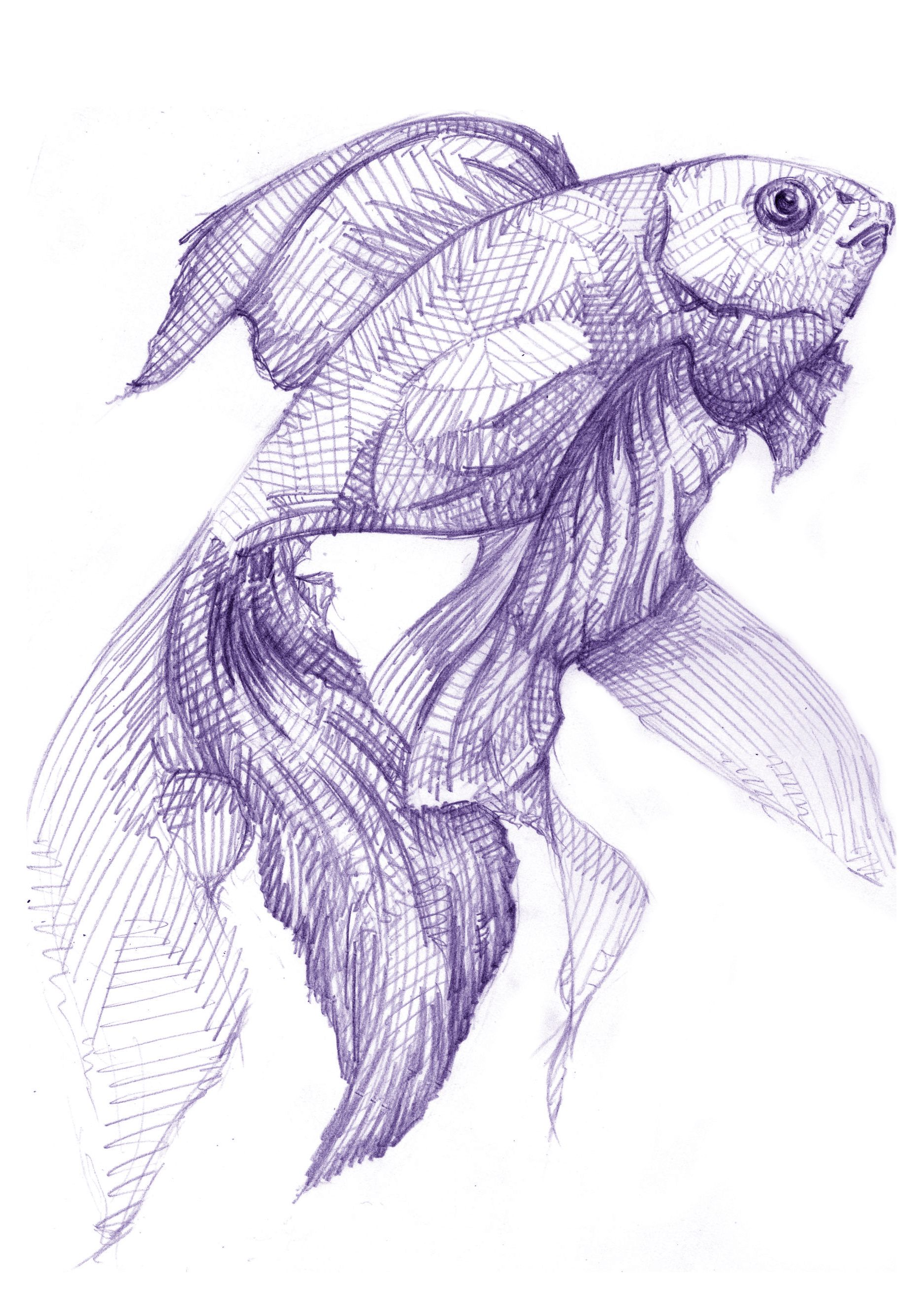 It's just an image of Rare Fish Drawing Images