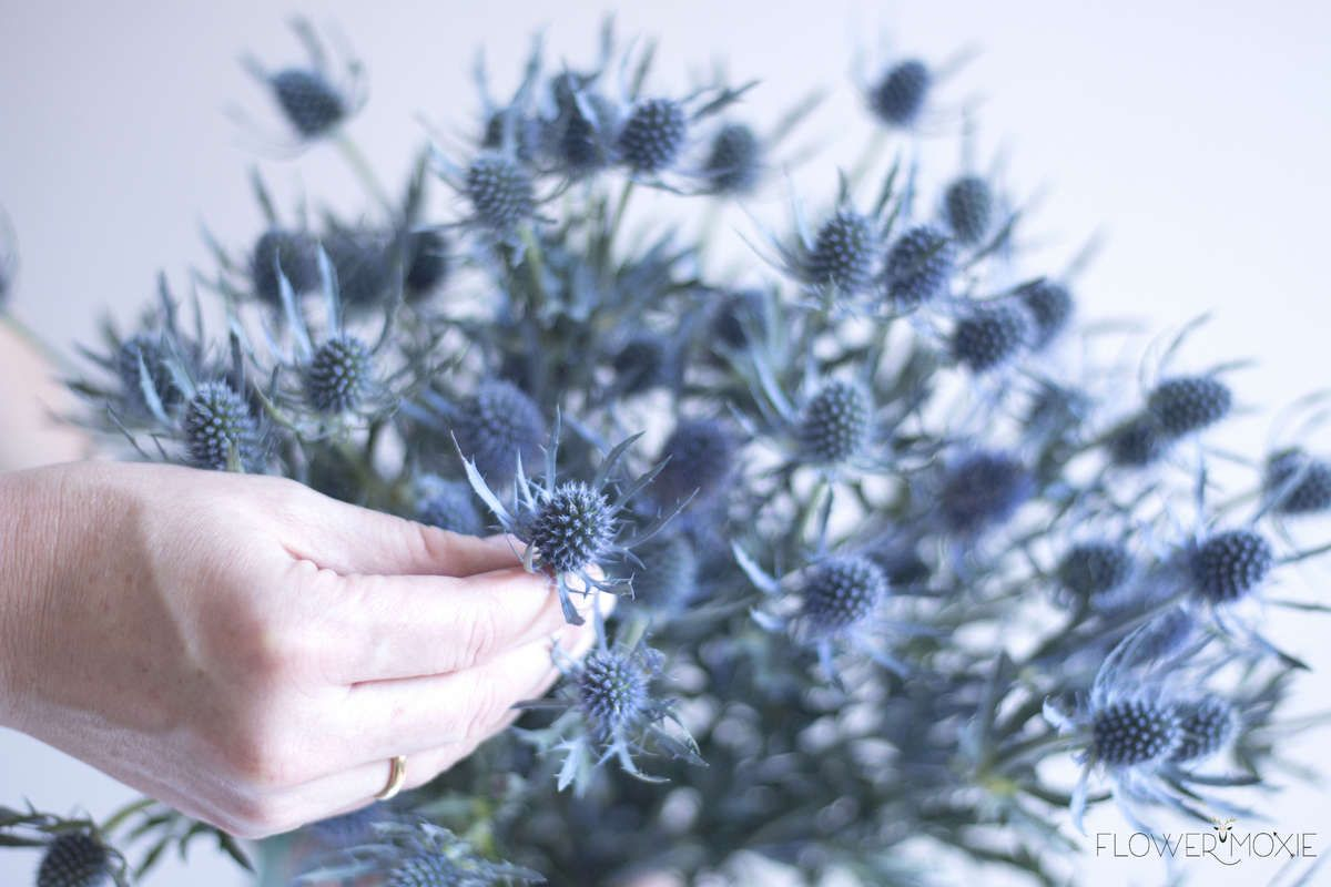 Image Result For Blue Thistle Wedding Bouquet