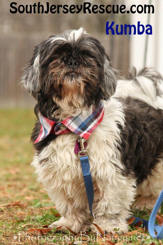 Adopt A Dog Dog Adoption Dogs Dog Shirt Collar
