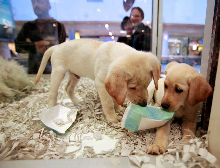 Pet Stores In The UK Are Now Banned From Selling Puppies