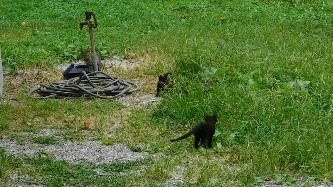 Crazy Kittens!