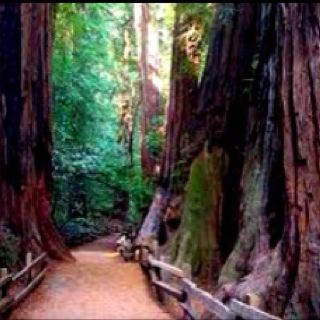 Muir Woods. Everyone should visit here. Peaceful, serene and a hushed quiet escape from the outside world.