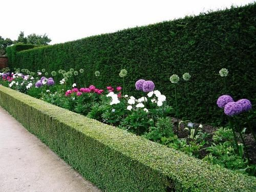 Powis Castle Wilmslow Guild Gardening Club Allium Garden Outdoor Gardens Castle Garden