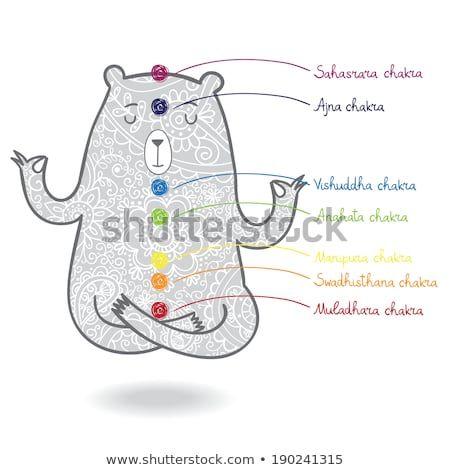image result for meditating bear  lotus position chakra
