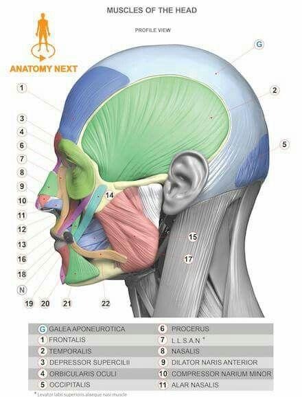 Pin de Coral Aponte en tutorial de arte | Pinterest | Anatomía ...