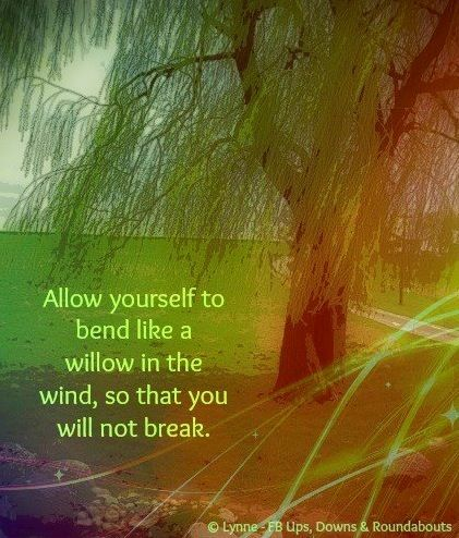 Bend like the willow advice quote via Ups, Downs, & Roundabouts at www.facebook.com/UpsDownsRoundabouts