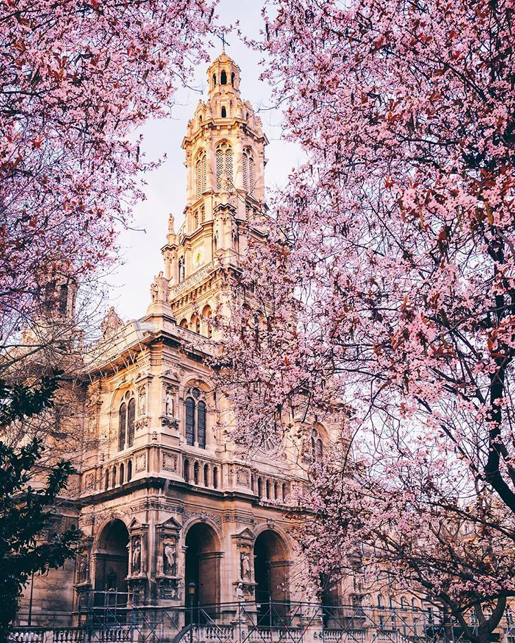 Spring blossom in Paris by Olivier Wong paris Pinterest Paris