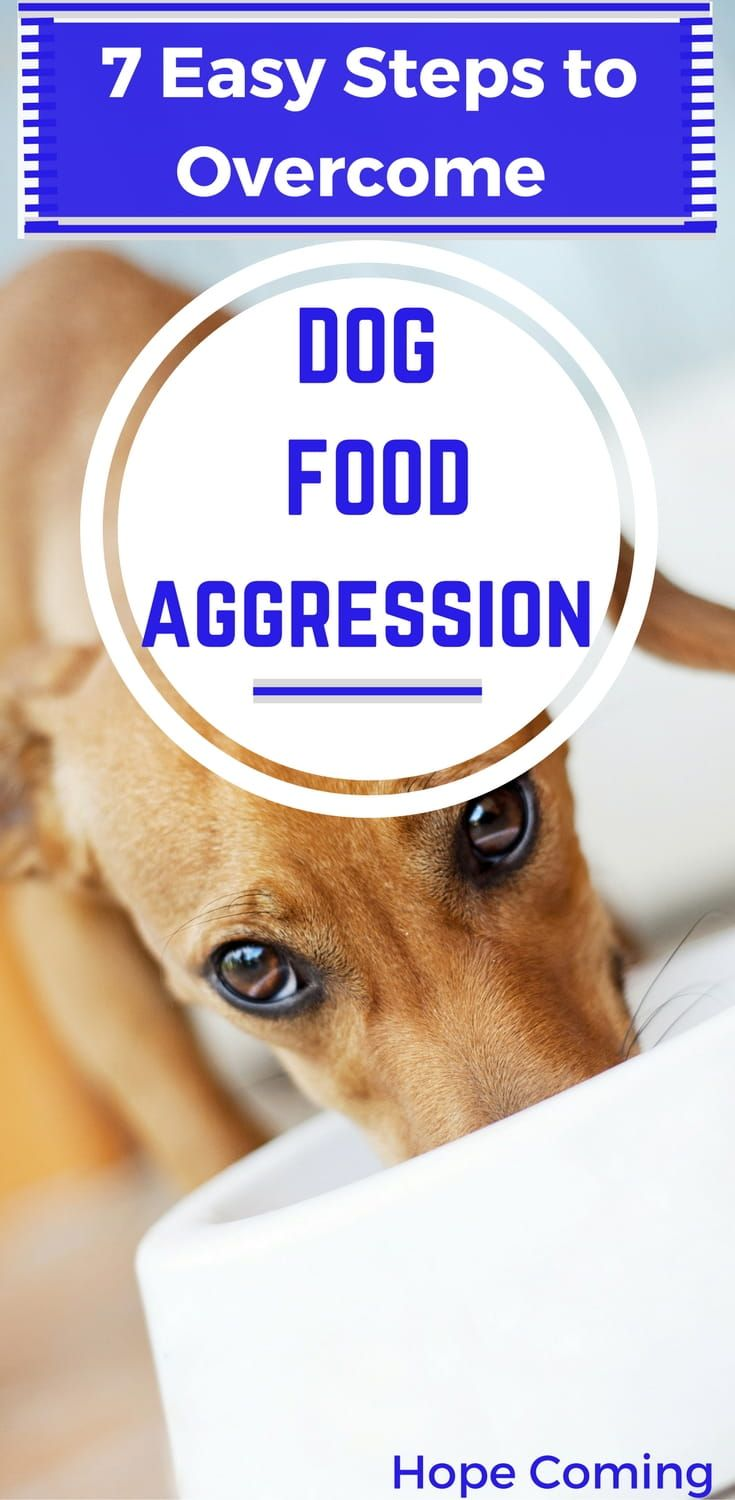 7 Easy Steps To Overcome Dog Food Aggression For The Dogs