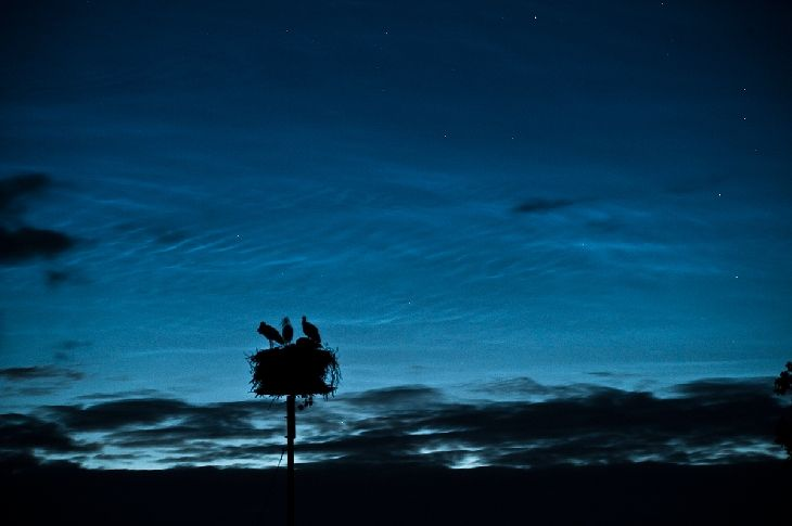 Finding beauty on our changing planet. Noctilucent clouds and nesting storks in Alberta.