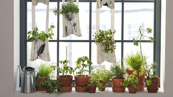 Je veux un jardin sur ma fenêtre | Plante verte, Jardinière murale, Jardin d'hiver
