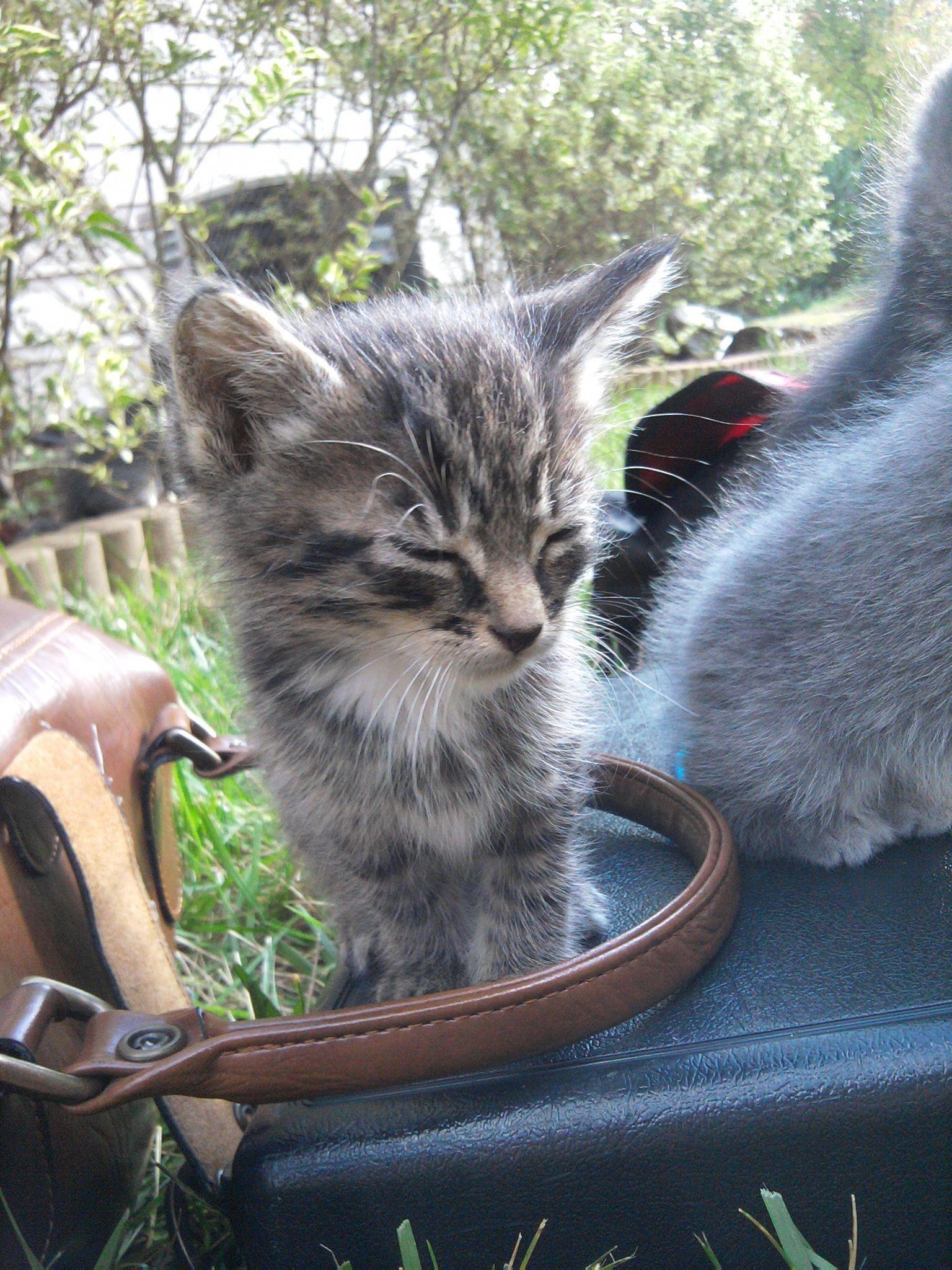 A little birdie told me Cute baby cats, Kittens cutest