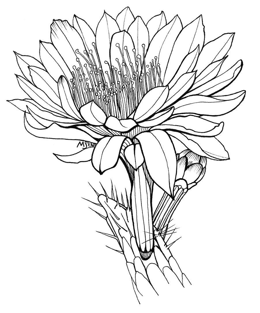 Pin on ilustr. flores ok  Cactus Flower Outline