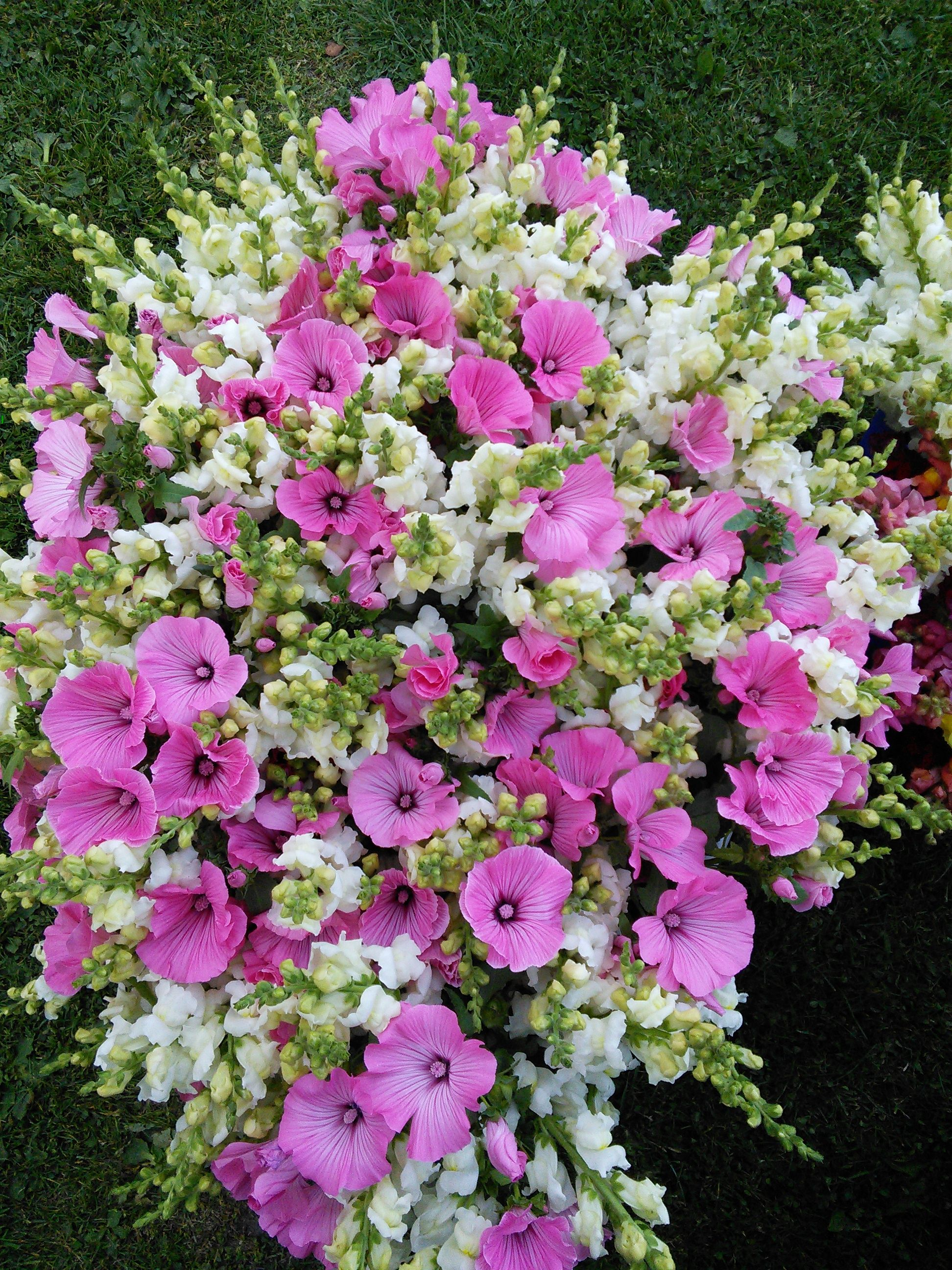 A bucket of Snapdragons and Malva