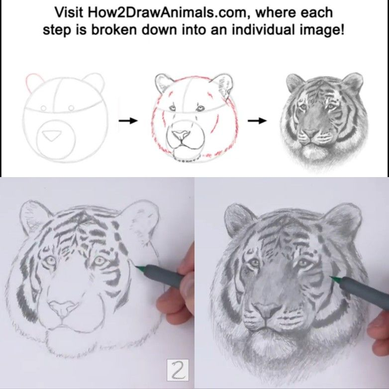 How To Draw A Tiger Head Detail Video Step By Step Pictures