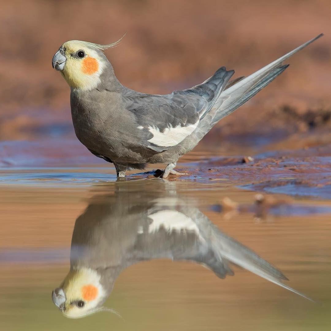 Pin En Aves Loros