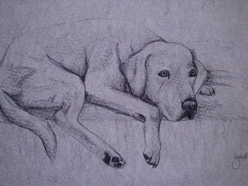 Kresleny Pes Tuzkou Hledat Googlem Drawing Pinterest