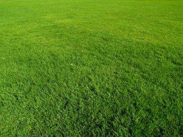 b08bd7ab268e4e17b23a72e6ca17a649 - How To Get Rid Of Reeds In A Field