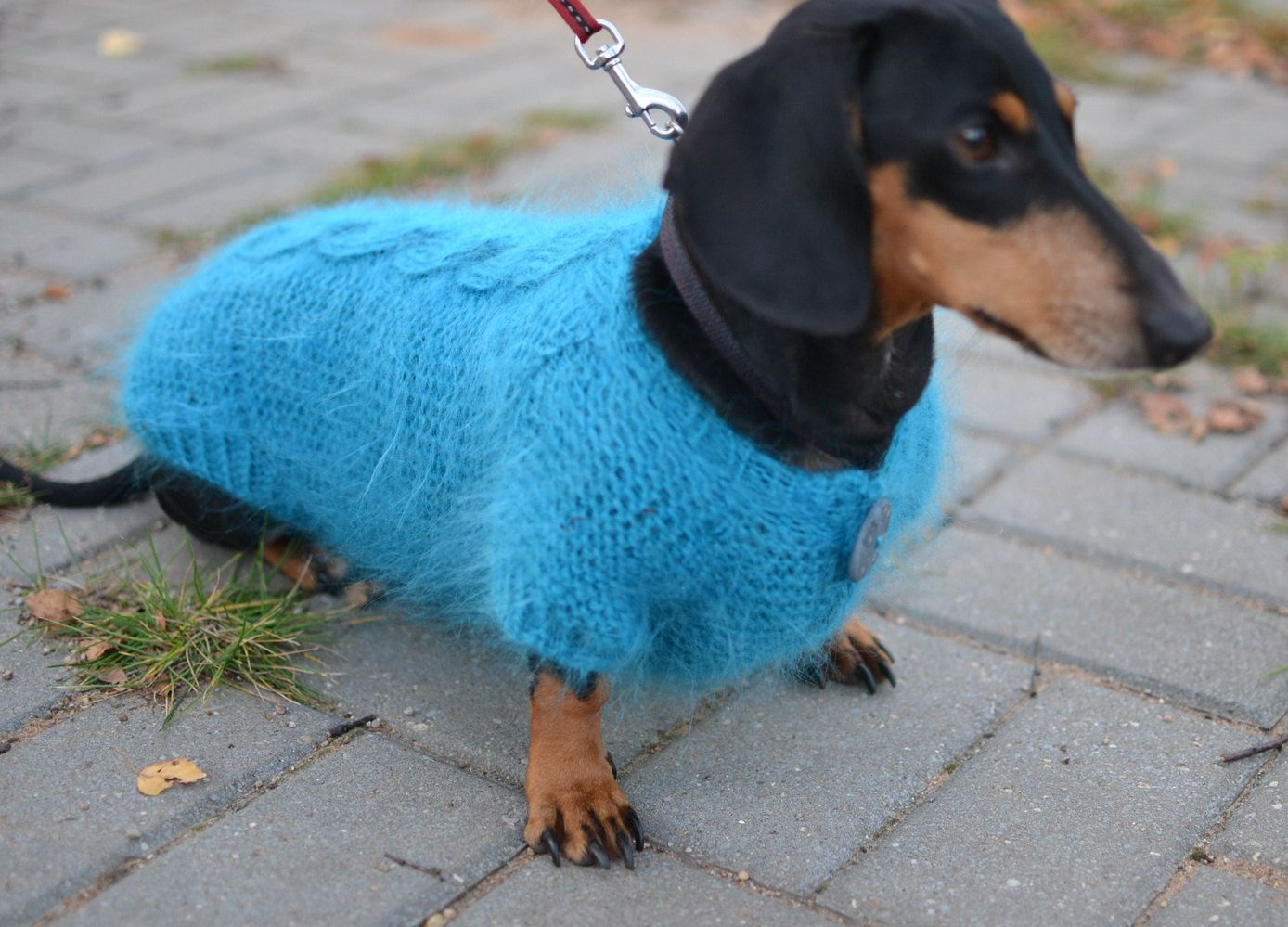 Dog sweater dachshund clothes warm hand knitting by puppy1love dog sweater dachshund clothes warm hand knitting by puppy1love 3500 bankloansurffo Gallery