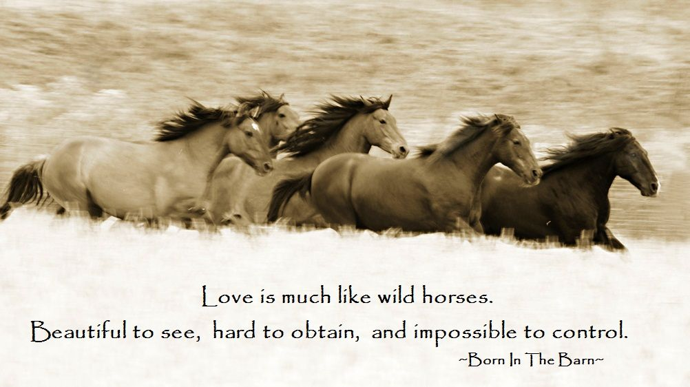 Love is much like wild horses. Beautiful to see, and ...