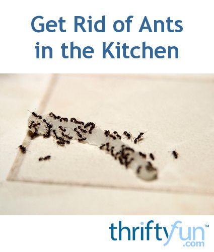 Getting Rid Of Ants In The Kitchen Rid Of Ants Get Rid Of Ants