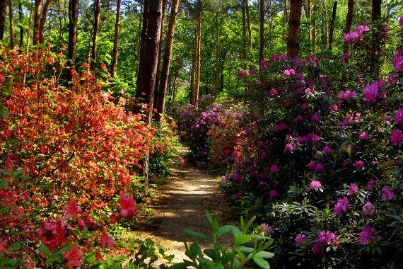 A legszebb virágok Magyarországon