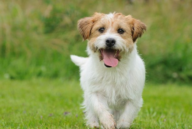Pet Stores Near Me Www Rosyandrocky Com Https Www Pinterest Com Rosyandrocky Pet Stores Near Me Https Www Pinterest Dogs Dogs And Kids Dogs And Puppies