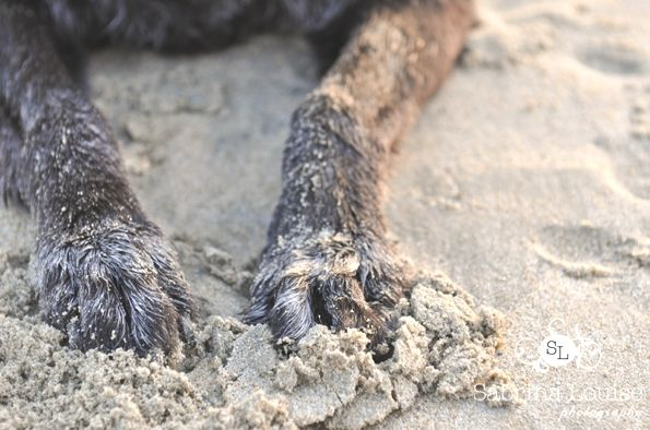 Love the paws in the sand!