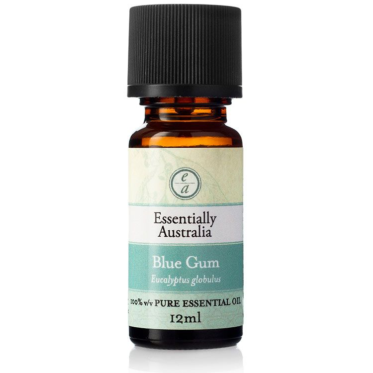Eucalyptus blue gum essential oil essentially australia