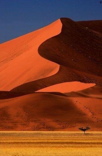 Big Dune Lone Tree, Sossusvlei, Namibia.