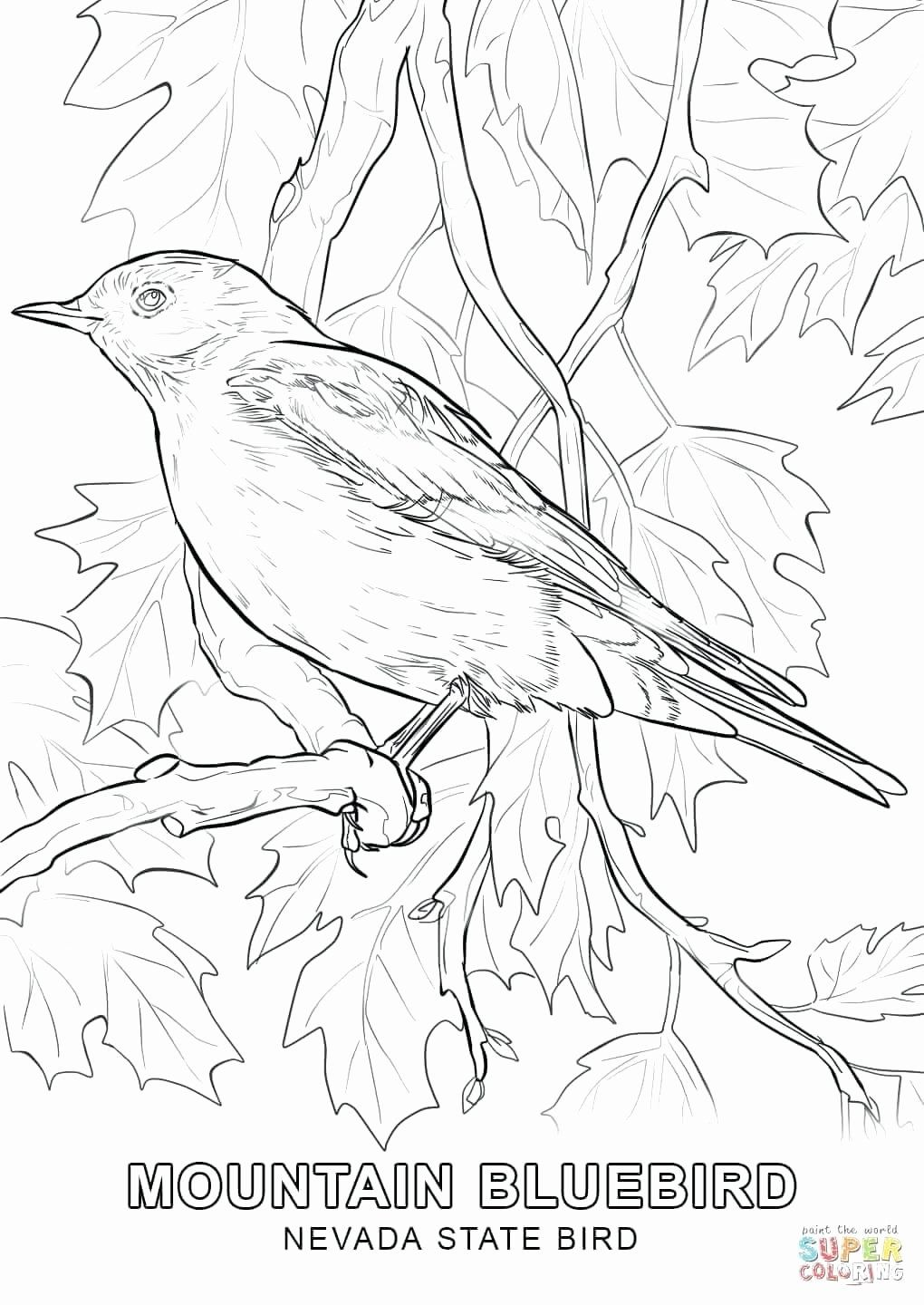 Pin On Popular Bird Coloring Pages
