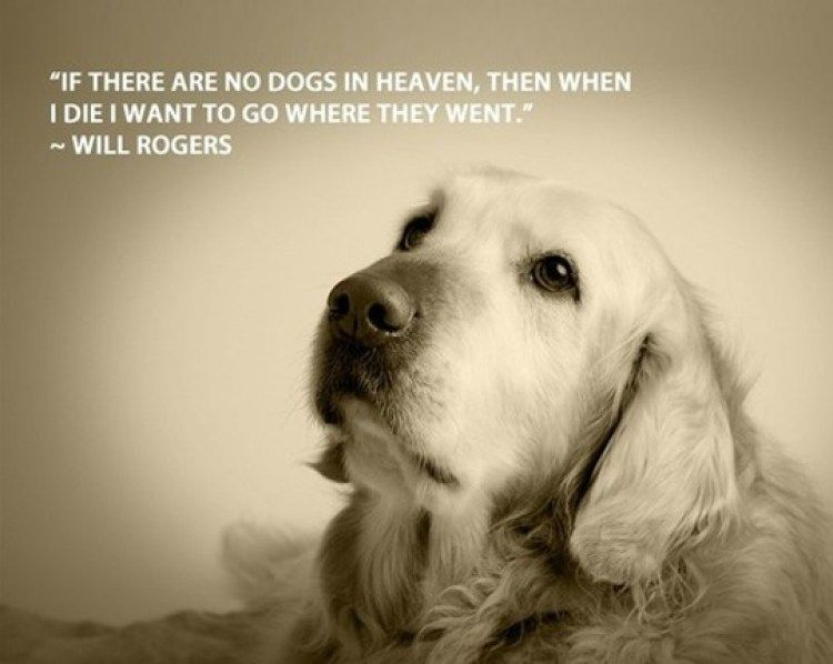 Funny Quotes About Owning A Dog Mr Tumblr Dog Quotes Funny Dog Quotes Dogs