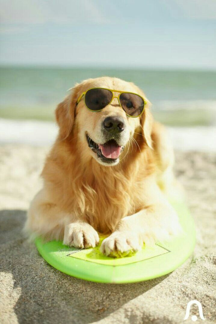 Pin By Victoria Peil On Furry Love Dog Friendly Beach Dog
