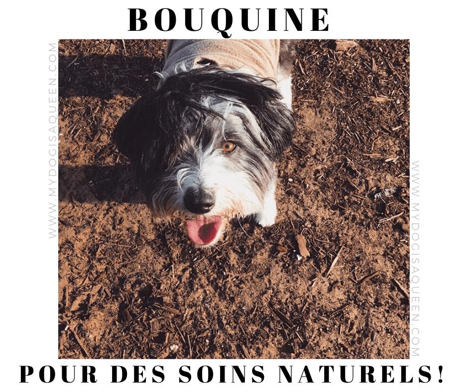 Nos livres; Des soins naturels pour mon chien …!   – Bouquine
