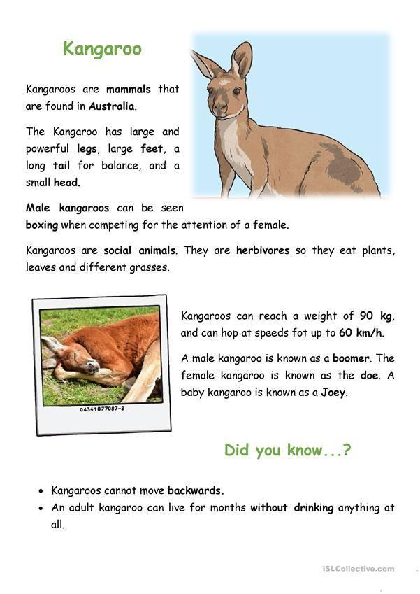 Kangaroo Worksheet - Free Esl Printable Worksheets Made By Teachers, Kangaroo Worksheet - Free Esl