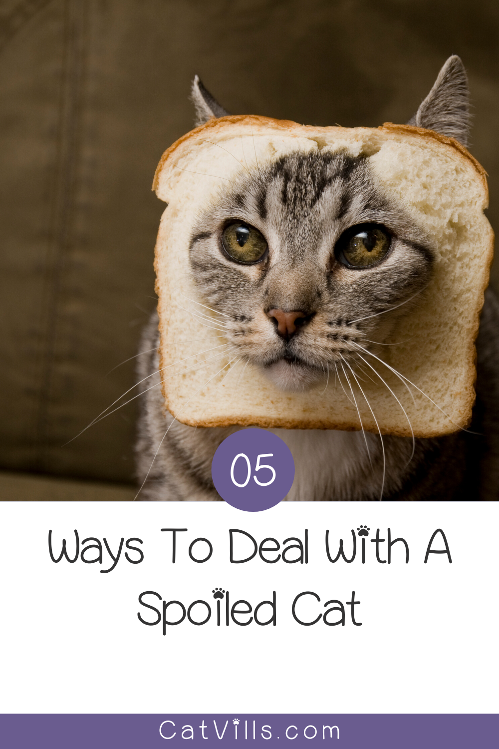 How Can I Deal with a Spoiled Cat? CatVills in 2020