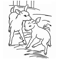 Top 25 Free Printable Goat Coloring Pages Online Farm Coloring Pages Animal Coloring Pages Farm Animal Coloring Pages