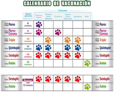 Vacunas Gatos Calendario.Animal Friend Calendario Vacunacion Perro Y Gato Animales