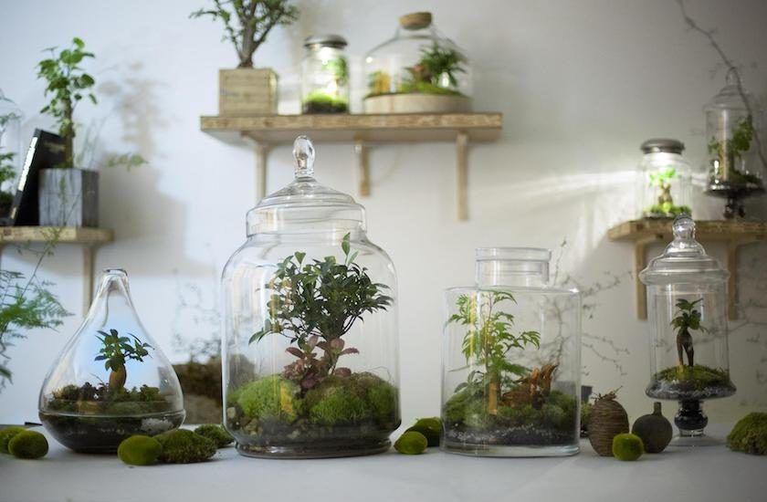 green factory jardin autosuffisant blog deco bonbonne en verre mini jardins et terrarium. Black Bedroom Furniture Sets. Home Design Ideas