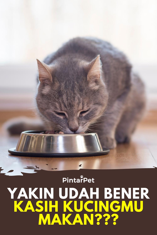 10++ Cara memberi makan kucing baru lahir trends
