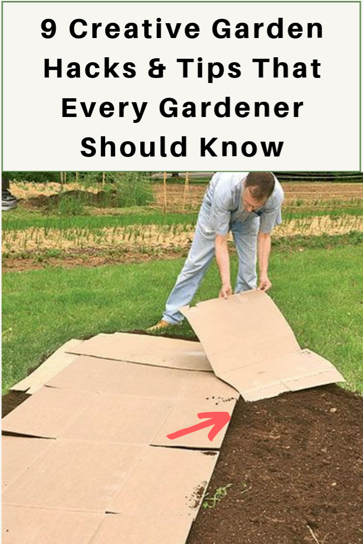 19 Creative Garden Hacks Tips That Every Gardener Should Know