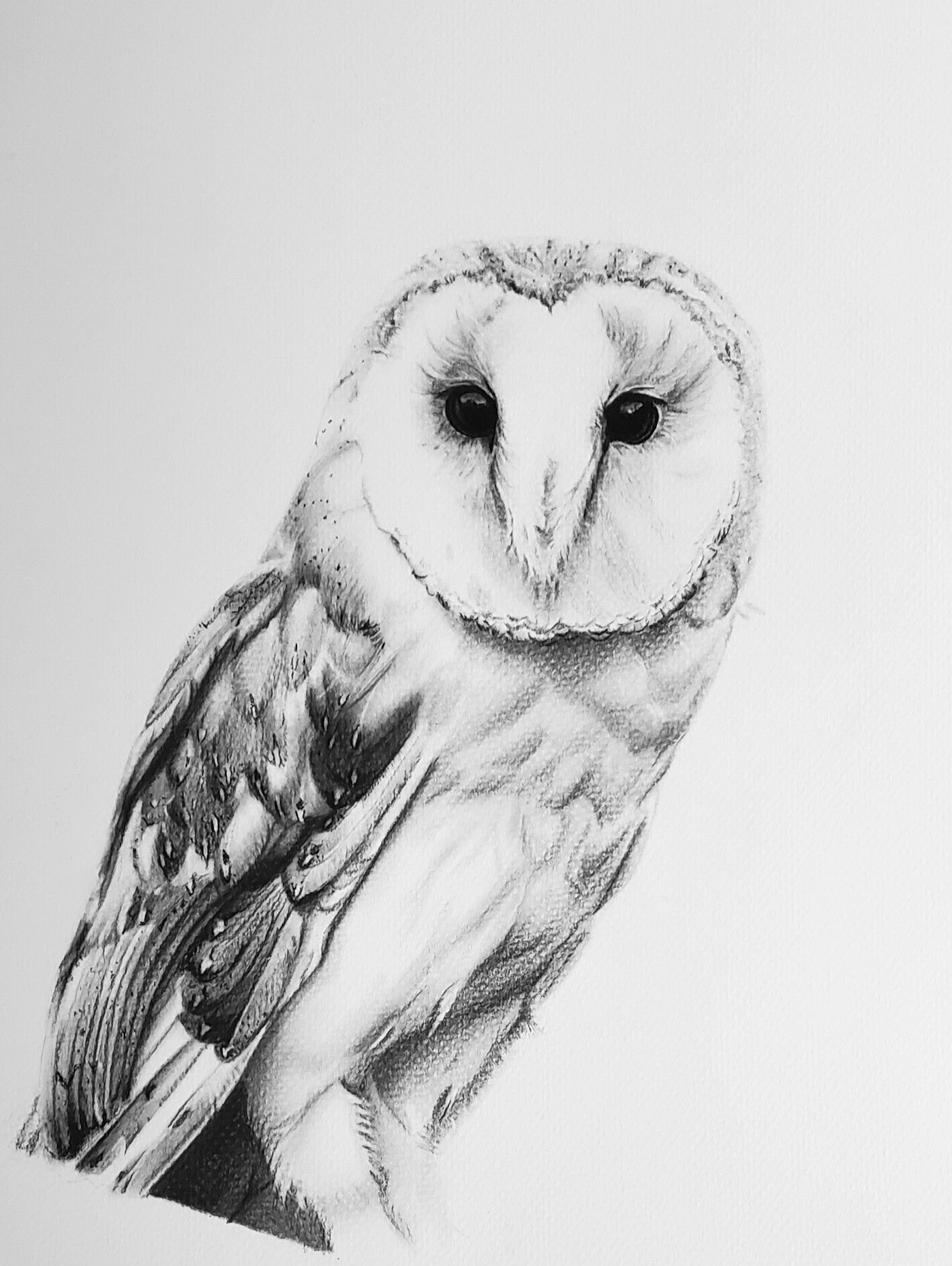 This is an 11x14in. barn owl drawing in charcoal on ...