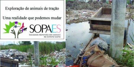 Brazil: Ban the Abuse of Working Horses and other Animals in the whole country!  PROIBIÇÃO DO USO DE ANIMAIS DE TRAÇÃO EM TODO O TERRITÓRIO NACIONAL