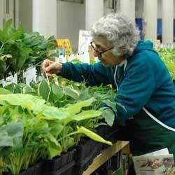 Volunteer at the Friend School Plant Sale