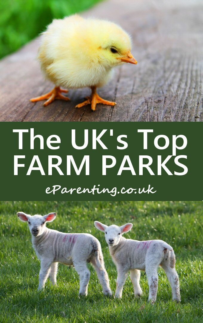 The Best Farm Parks in Britain Animal close up, Park
