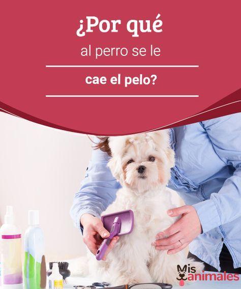 ¿Por qué al perro se le cae el pelo?  ¿Sabes por qué a tu perro se le cae el pelo? Aquí desvelaremos las posibles causas de esta afección canina que tanto preocupa a los dueños. #razones #pelo #mascotas #alimentación