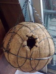 Possum Nests Boxes And Other Useful Information Animalia