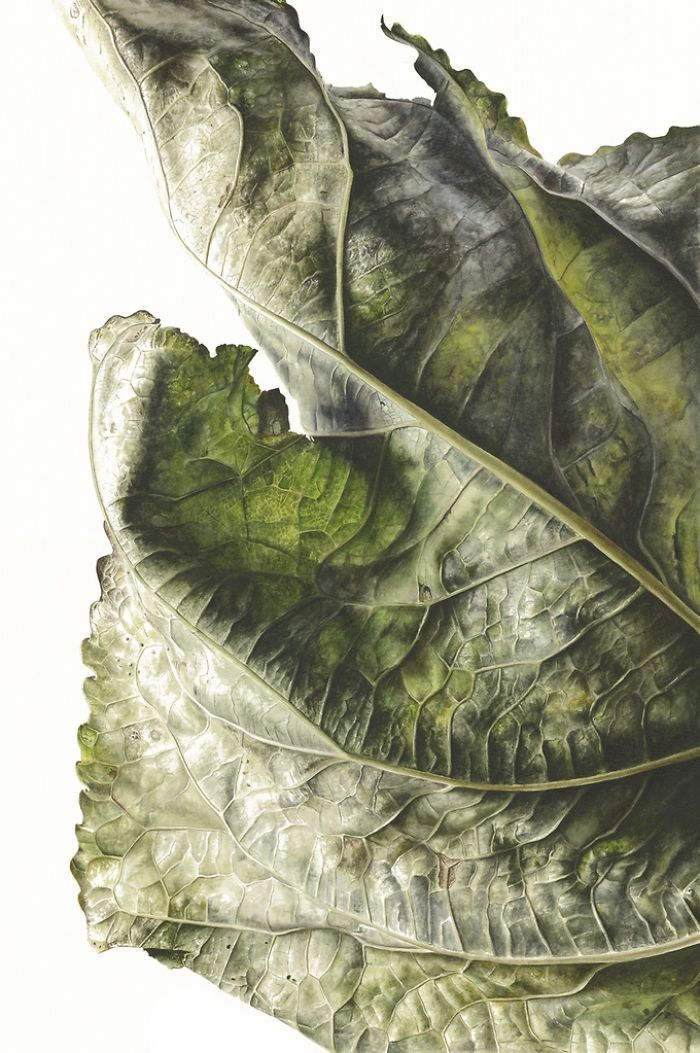 For The Last Two Years, I Have Been Painting Leaves That Tell A Story