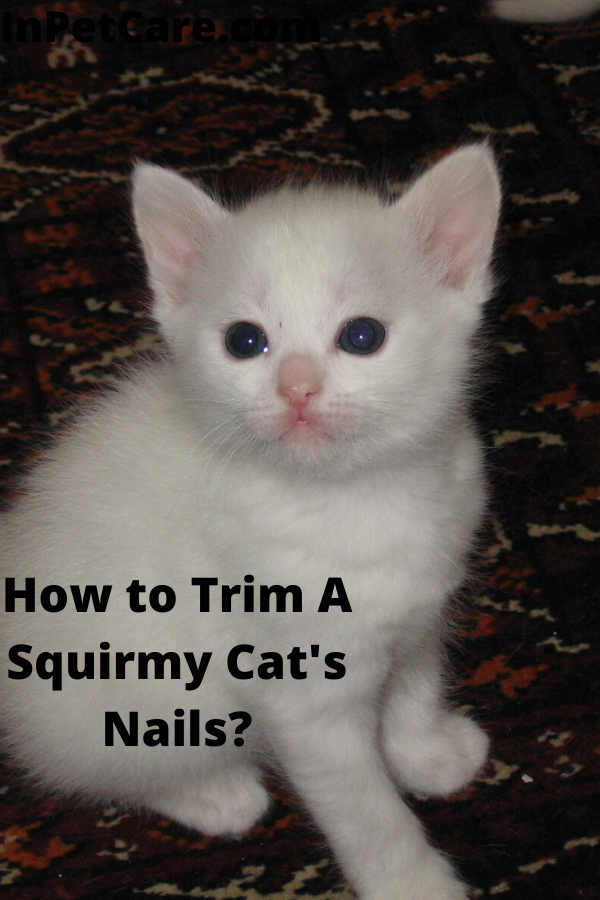 How To Trim A Squirmy Cat S Nails A Complete Guide Newborn Kittens Kitten Care Newborn Kitten Care